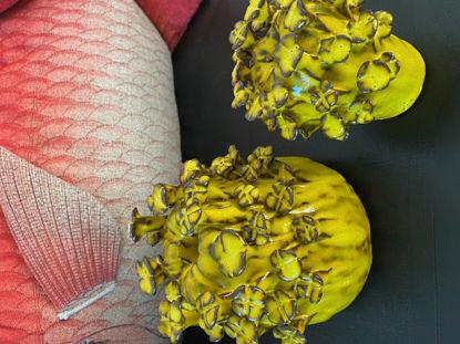 Afbeeldingen van 2 Bloemen vaasjes