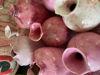 Afbeeldingen van Bord met vaasjes Roze